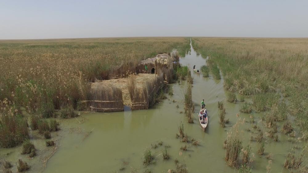 Marais d'Irak